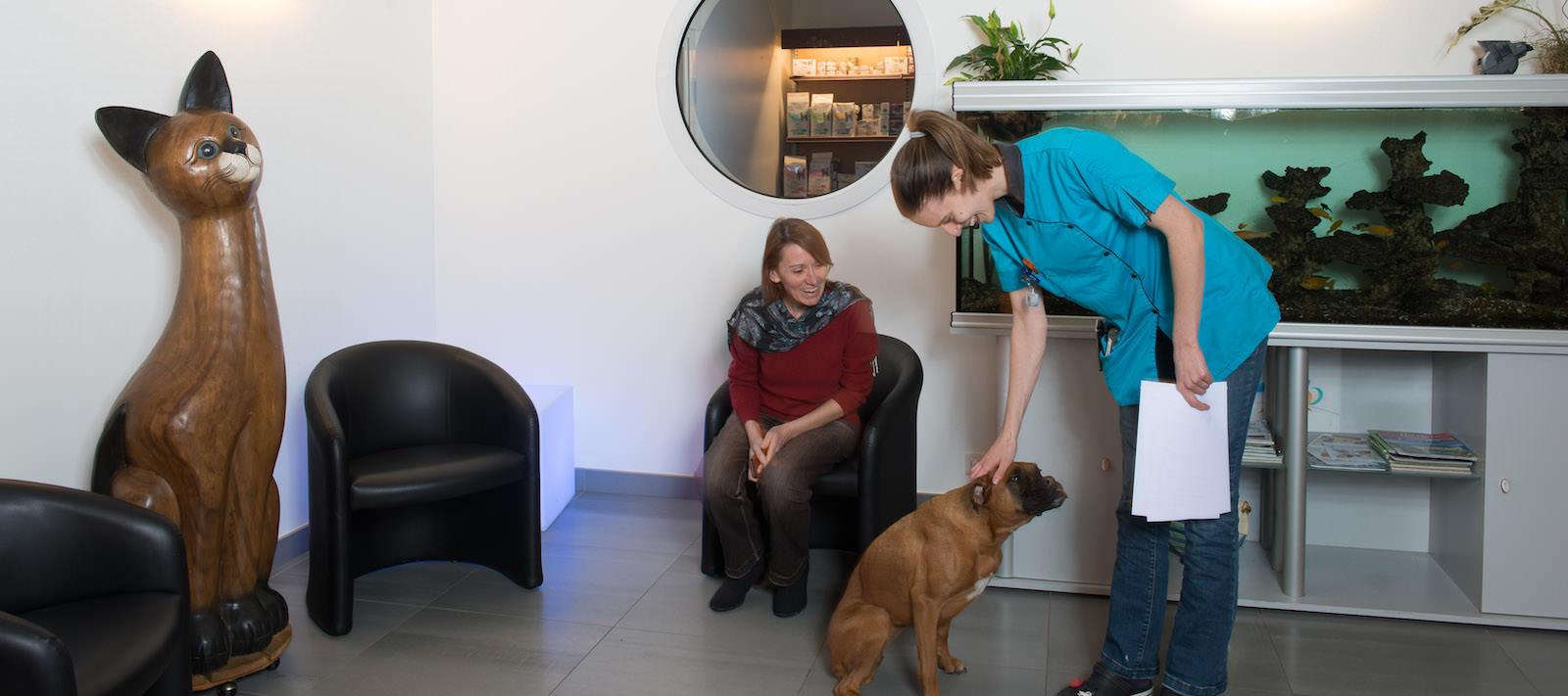 Vétérinaire pour chiens et chats à Nantes